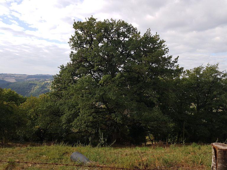 paysage d'Espeyrac